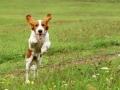 Dog Walking - venčenie psov