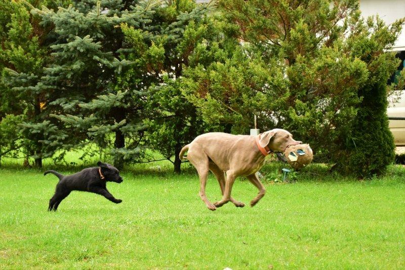 Pes v pohode - hotel pre psy   výcvik psov   venčenie psov   poradenstvo   Bratislava, Trnava a okolie