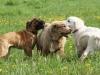 Pes v pohode - hotel pre psy | výcvik psov | venčenie psov | poradenstvo | Bratislava, Trnava a okolie