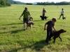 Výcvik psov